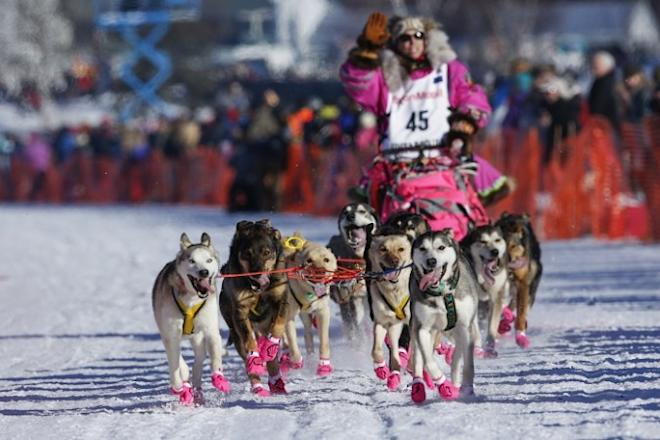 Iditarod Trail Sled Dog Race, dosg race, 5 interesting facts, long-distance dog race