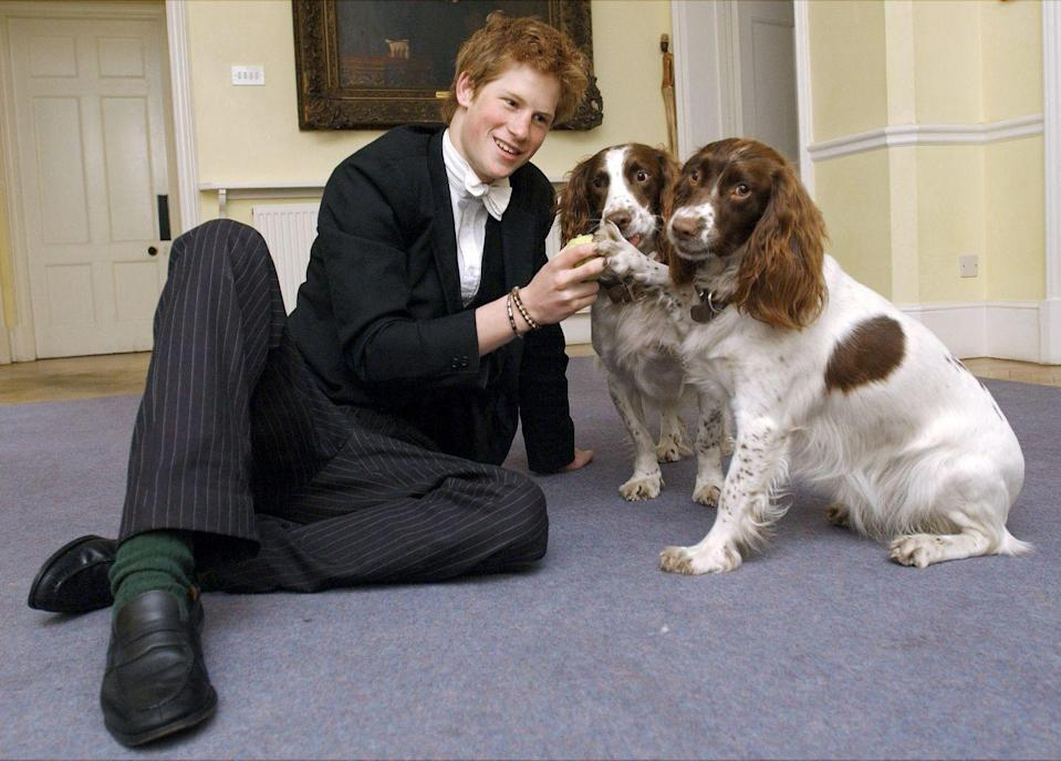 <p>Prince Harry plays with Rosie and Jenny, the dogs owned by Andrew Gailey, the Housemaster of Manor House at Eton College.</p>