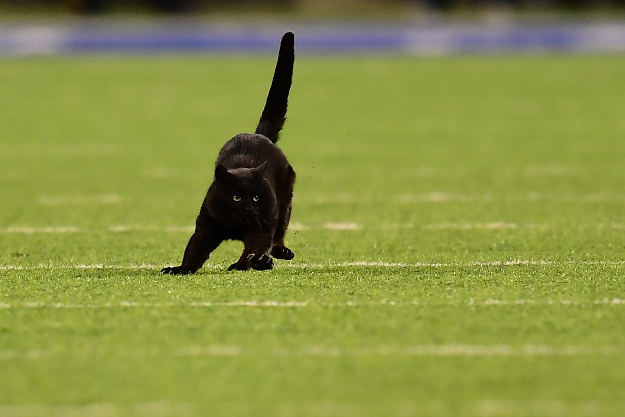 A black cat runs on the field during the second quarter of a New York Giants and Dallas Cowboys game at MetLife Stadium. (Getty Images)