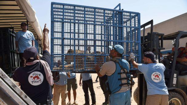 PHOTO: Several animals trapped in Syria's destroyed Aleppo zoo were rescued by members of Four Paws and transported to Turkey, July 21, 2017.  (Ahu Savan An/Four Paws)