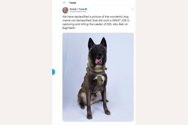 US President Donald Trump tweeted a picture of the military dog that helped corner Islamic State group leader Abu Bakr al-Baghdadi (AFP Photo/-)