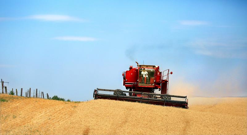 Source of GMO wheat in Oregon remains mystery
