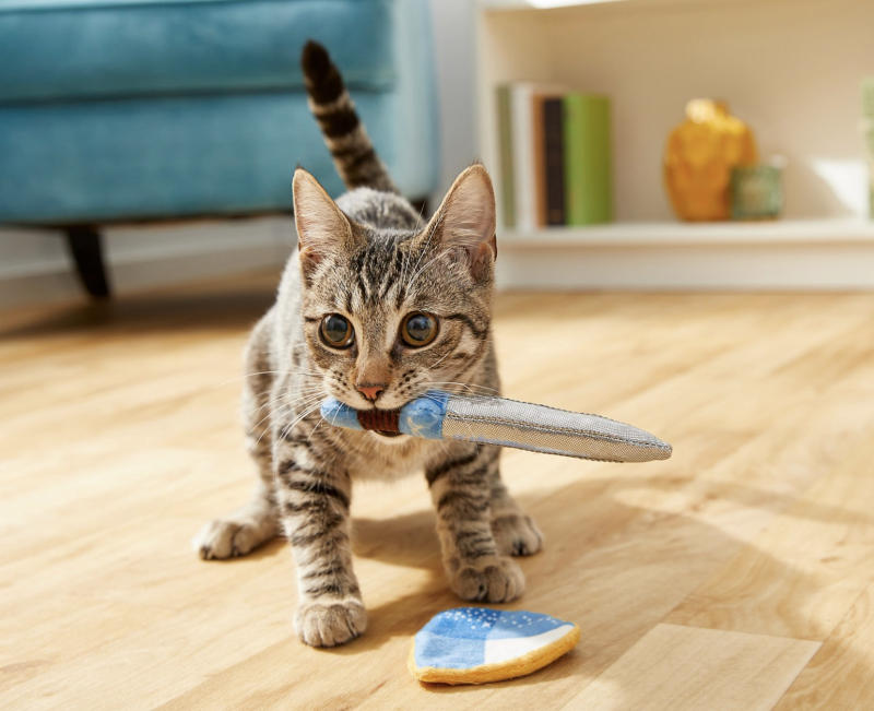 Is your cat a knight? (Photo: Chewy)