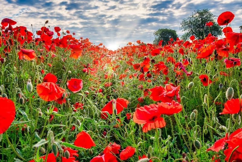 """November 11, 1914-1918 - Remembrance Day: """"War and Weather"""" Part 2"""