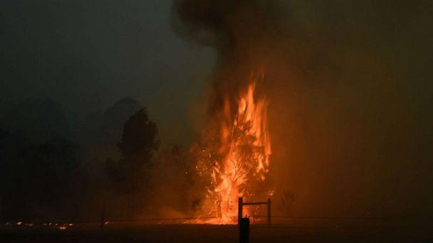 PHOTO: A tree burns on a residential property as bushfires hit the area around the town of Nowra in the Australian state of New South Wales on Dec. 31, 2019. (AFP via Getty Images)