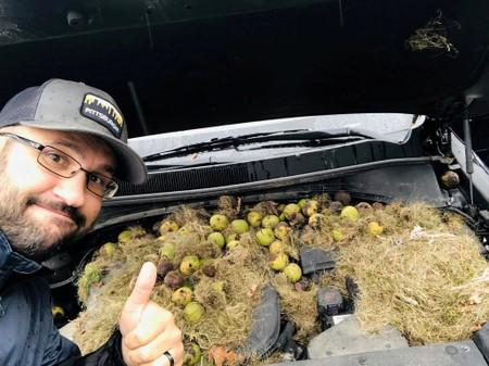 A man gestures next to walnuts and grass hidden by squirrels seen under the hood of a car, in Allegheny County, Pennsylvania, U.S. in this October 7, 2019 image obtained via social media
