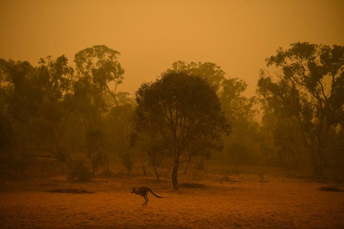 A kangaroo is seen in bushland surrounded by smoke haze early morning in Canberra, Australia, January 5, 2020..JPG