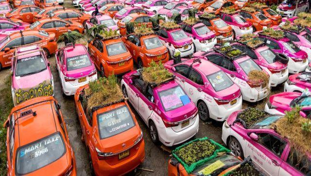 In a car park in Thailand's capital of Bangkok, green shoots sprout from the roofs of colourful taxis. A mass graveyard for Bangkok's flamboyantly coloured cabs left idle and decaying by coronavirus curbs has come to life with mini vegetable gardens and frog ponds set up to help feed out-of-work drivers. AFP