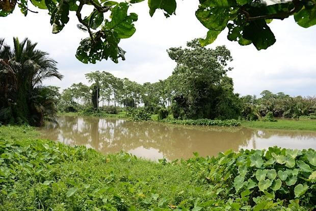 The Air Hitam Dalam node of the Sungai Perai can be further activated by restoring the Air Hitam Dalam Educational Forest.