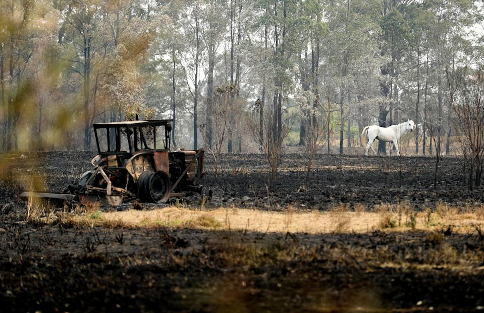 """NEW SOUTH WALES, Nov. 11, 2019 -- A white horse trots on the field where a farmhouse was burnt by bushfires near Port Macquarie, New South Wales, Australia, Nov. 11, 2019.    A devastating start to the Australian bushfire season has prompted a state of emergency in the eastern state of New South Wales , with the country's largest city, Sydney bracing for """"catastrophic"""" fire danger.     On Monday, a state of emergency was declared for NSW, with exceptionally hot and windy conditions predicted for Tuesday, threatening to create an even bigger fire disaster than that which left three people dead last week. (Photo by Bai Xuefei/Xinhua via Getty) (Xinhua/Bai Xuefei via Getty Images)"""