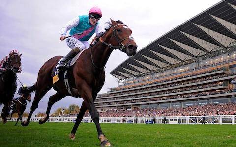 Frankel won his 14th and final race at the Champion Stakes at Ascot in 2012 - Credit: Getty Images