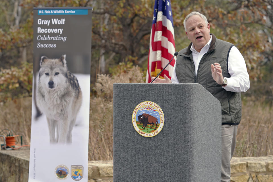 "Interior Secretary David Bernhardt announces the gray wolf's recovery ""a milestone of success"" during a stop at the Minnesota Valley National Wildlife Refuge, Thursday, Oct. 29, 2020, in Bloomington, Minn. The move stripped Endangered Species Act protections for gray wolves in most of the U.S., ending longstanding federal safeguards and putting states and tribes in charge of overseeing the predators. (AP Photo/Jim Mone)"