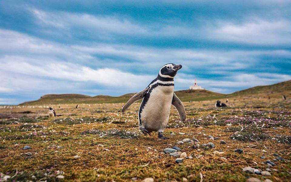 The farewell from Ushuaia consisted of a Magellanic penguin and other animals