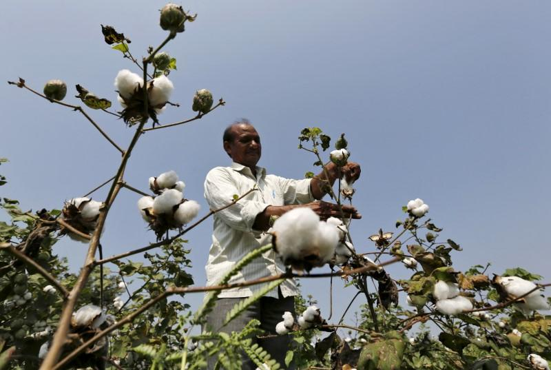 Coronavirus undermines Indian crop prices, derails rural rebound