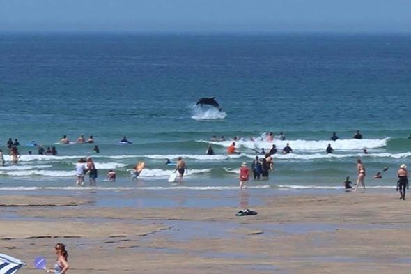 Dolphins delight tourists on Cornwall beach