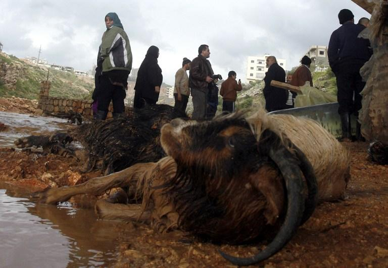 A dead goat is left dead after heavy rains and big wind on January 7, 2013 in the Lebanese southern city of Jadra. Heavy rains have hit the region making six people injured in Israel.  AFP PHOTO MAHMOUD ZAYYAT