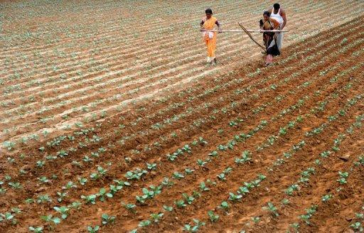An Indian farmer ploughs his field with the help of family members