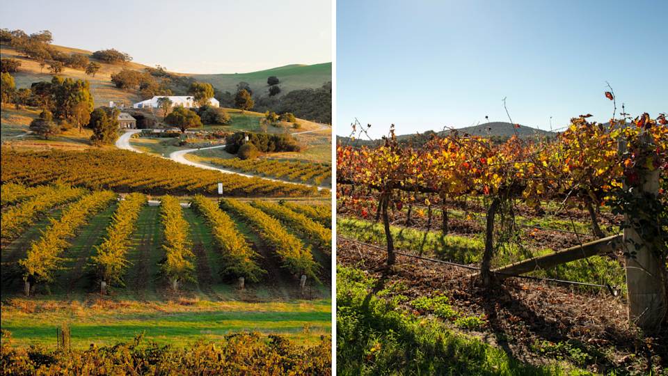 The wine regions of Barossa Valley and Mudgee have been tipped as two areas where property prices are set to grow. (Source: Getty)