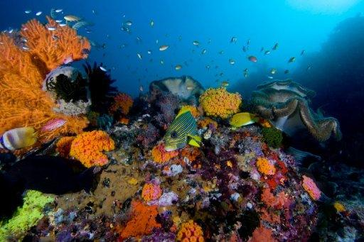 Handout picture released by the International Union for Conservation of Nature (IUCN) shows a coral reef in Raja Ampat Islands