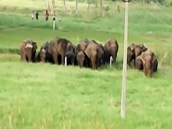 A visual of the rampaging herd (ANI).