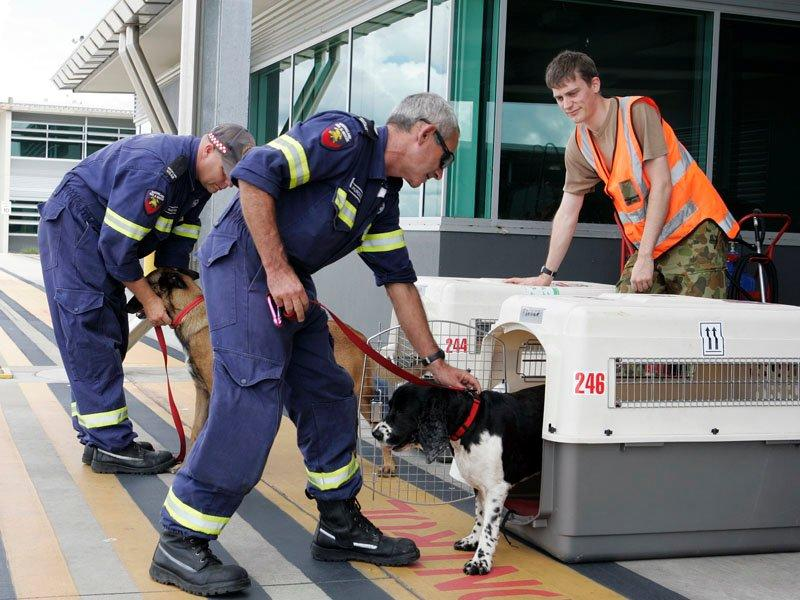 Backdown over cuts to airport dog handlers