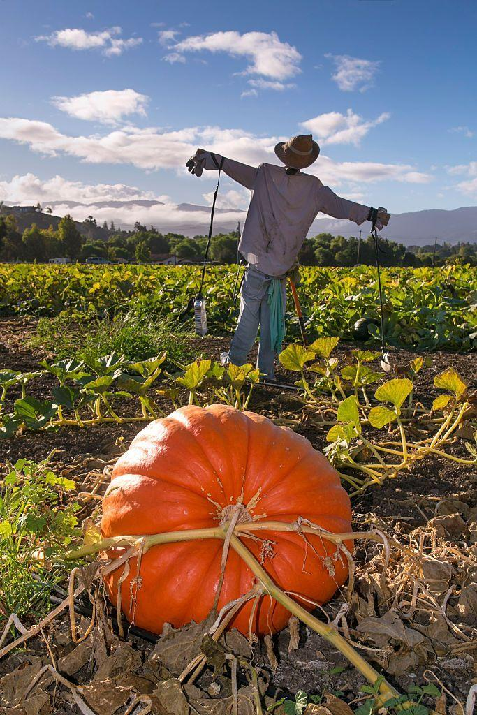 """<p>Whether it's pecans, apples, pumpkins, or oysters, there's something for everyone. Find your perfect local <a href=""""https://www.oprahmag.com/life/g28041226/best-fall-harvest-festivals/"""" rel=""""nofollow noopener"""" target=""""_blank"""" data-ylk=""""slk:fall harvest festival"""" class=""""link rapid-noclick-resp"""">fall harvest festival</a> here.</p>"""