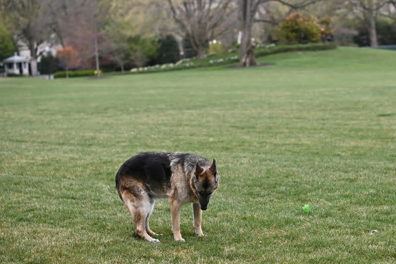 FILE PHOTO: U.S. President Joe Biden's dog Champ is seen on the South Lawn of the White House in Washington