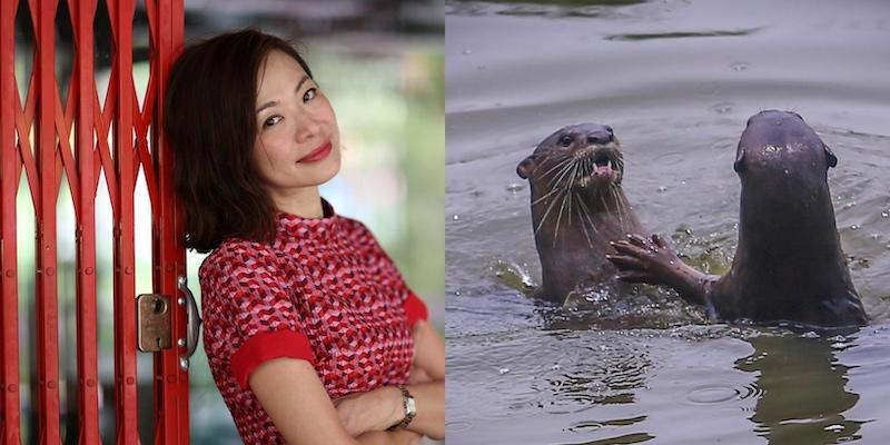 Low lost an arowana, several koi fish, and cichlids during the otters' siege on her spa pond. — Pictures from Facebook/jazreel.low and Hari Anggara