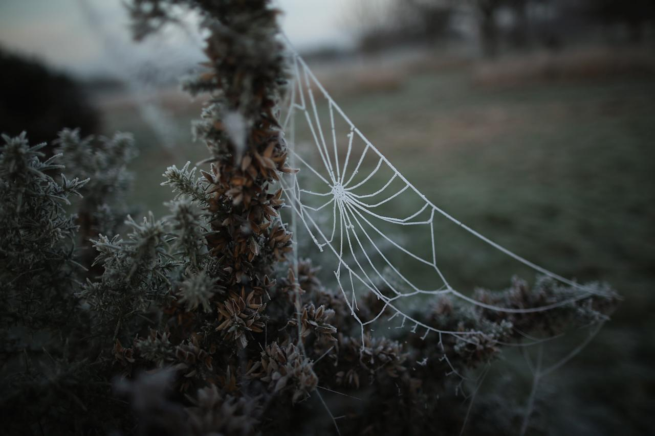 LONDON, ENGLAND - DECEMBER 12:  The early morning frost clings to a cobweb in Regents Park on December 12, 2012 in London, England. Forecasters have warned that the UK could experience the coldest day of the year so far today, with temperatures dropping as low as -14C, bringing widespread ice, harsh frosts and freezing fog. Travel disruption is expected with warnings for heavy snow in some parts of the country.  (Photo by Dan Kitwood/Getty Images)