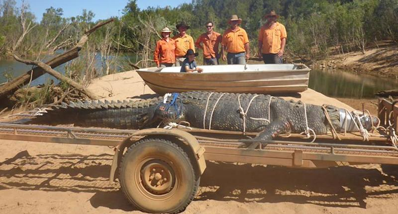 The beast is 4.7 metres long. Facebook NT Parks and WildlifeMore