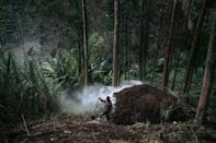 The WWF is among groups trying to minimise the impact of charcoal burning by introducing more efficient ovens