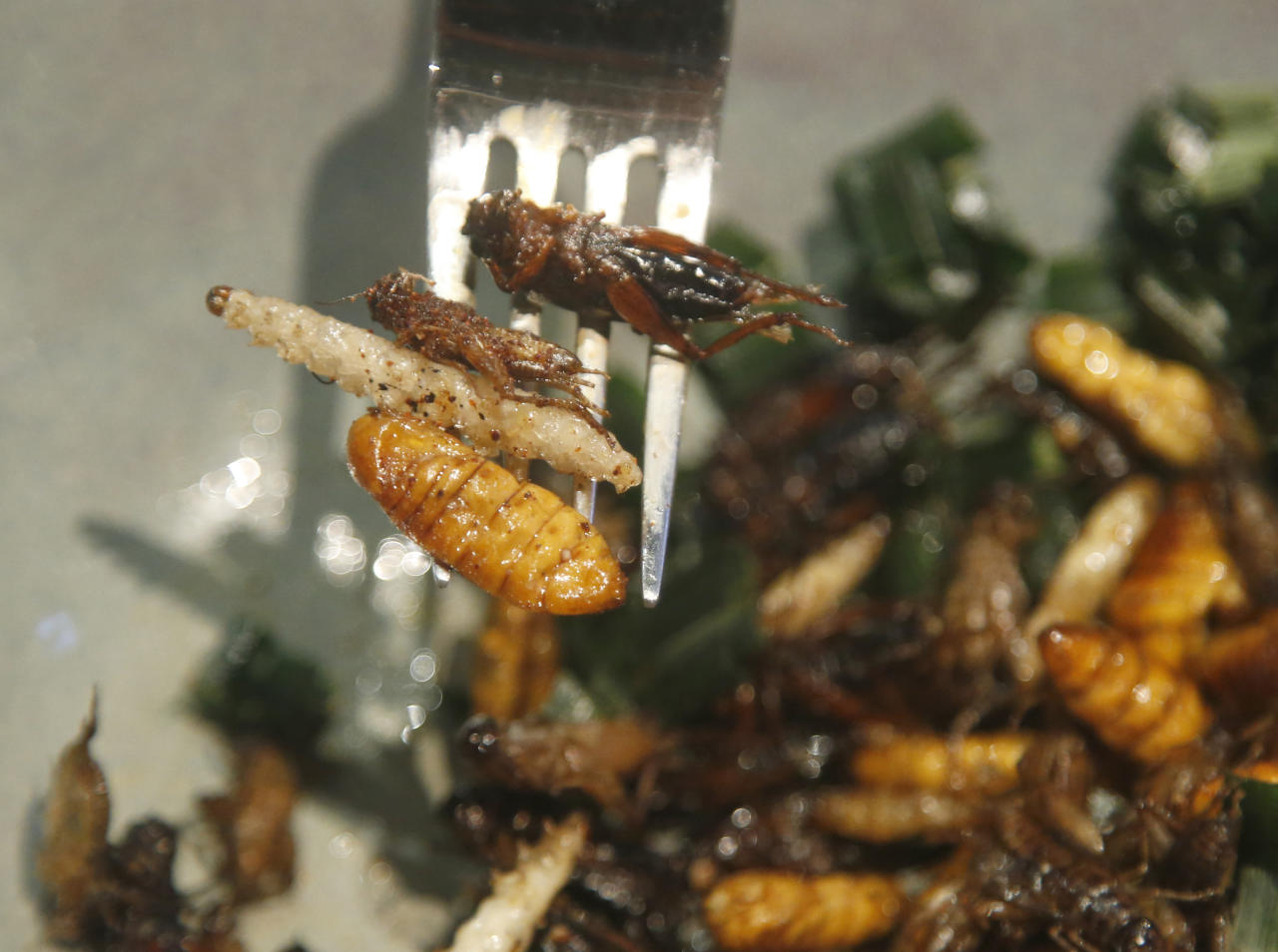 FIXES TYPOS - In this Tuesday, Sept. 12, 2017, photo, a bamboo worm, silkworm and fried crickets are displayed on a fork before being eaten at Insects in the Backyard restaurant, in Bangkok, Thailand. Tucking into insects is nothing new in Thailand, where street vendors pushing carts of fried crickets and buttery silkworms have long fed locals and adventurous tourists alike. But bugs are now fine-dining at the Bangkok bistro aiming to revolutionize views of nature's least-loved creatures and what you can do with them. (AP Photo/Sakchai Lalit)