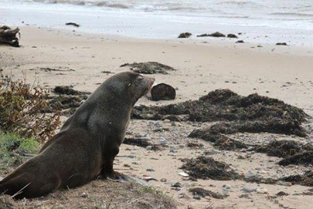 Sammy was released back to the sea. Source: Devonport Council