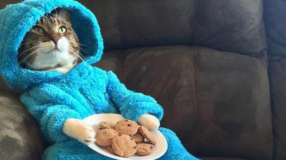 Cookie Monster Cat Stars in Error Email That Goes Vial
