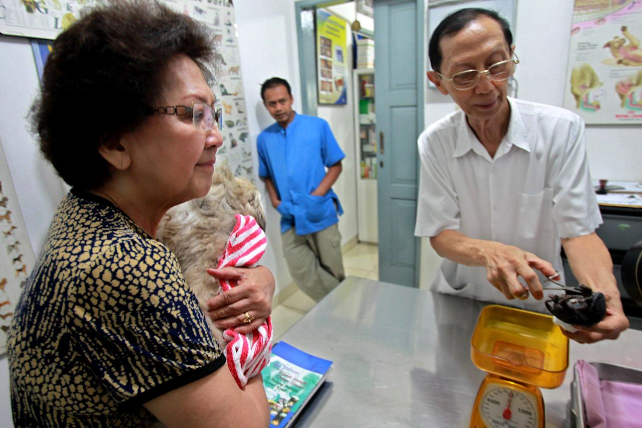 JAKATRA, INDONESIA - MARCH 25:  A veterinarian shows the seven-legged puppy to visitors at a veterinary clinic in Cilandak on March 25, 2013 in Jakarta, Indonesia. The puppy was born on February 8 with a birth defect resulting in it having multiple limbs. The veterinary doctors tried to save the animal, but it did not survive more than an hour after birth. (Photo by Nurcholis/Getty Images)