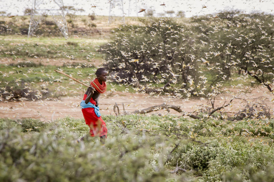"""FILE - In this file photo taken Thursday, Jan. 16, 2020, a Samburu boy uses a wooden stick to try to swat a swarm of desert locusts filling the air, as he herds his camel near the village of Sissia, in Samburu county, Kenya. Climate change could push more than 200 million people to move within their own countries in the next three decades and create migration hotspots unless urgent action is taken in the coming years to reduce global emissions and bridge the development gap, a World Bank report has found. The report published on Monday, Sept. 13, 2021 examines how long-term impacts of climate change such as water scarcity, decreasing crop productivity and rising sea levels could lead to millions of what the report describes as """"climate migrants"""" by 2050. (AP Photo/Patrick Ngugi, File)"""