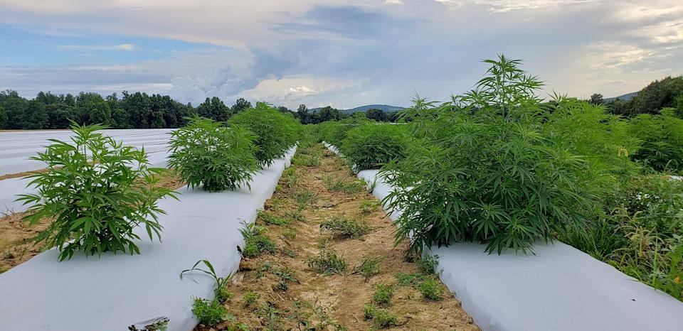 According to MarketsandMarkets, the cannabis market is projected to reach US$ 90.4 billion by 2026, recording a CAGR of 28.0%, in terms of value
