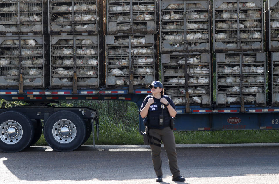 FILE - In this this Aug. 7, 2019 file photo, a trailer loaded with chickens passes a federal agent outside a Koch Foods Inc., plant in Morton, Miss., following an immigration raid. Federal officials announced Thursday, Aug. 6, 2020, the indictments of four executives from two Mississippi poultry processing plants on federal charges tied to one of the largest workplace immigration raids in the U.S. in the past decade. (AP Photo/Rogelio V. Solis, File)