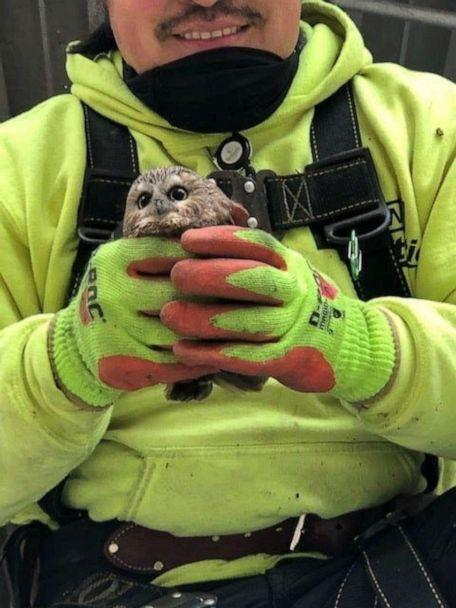 PHOTO: Rockefeller, a northern saw-whet owl, is held by a man after being found and rescued in a Christmas tree in Rockefeller Center, in New York, Nov. 16, 2020. (Ravensbeard Wildlife Center via Reuters)