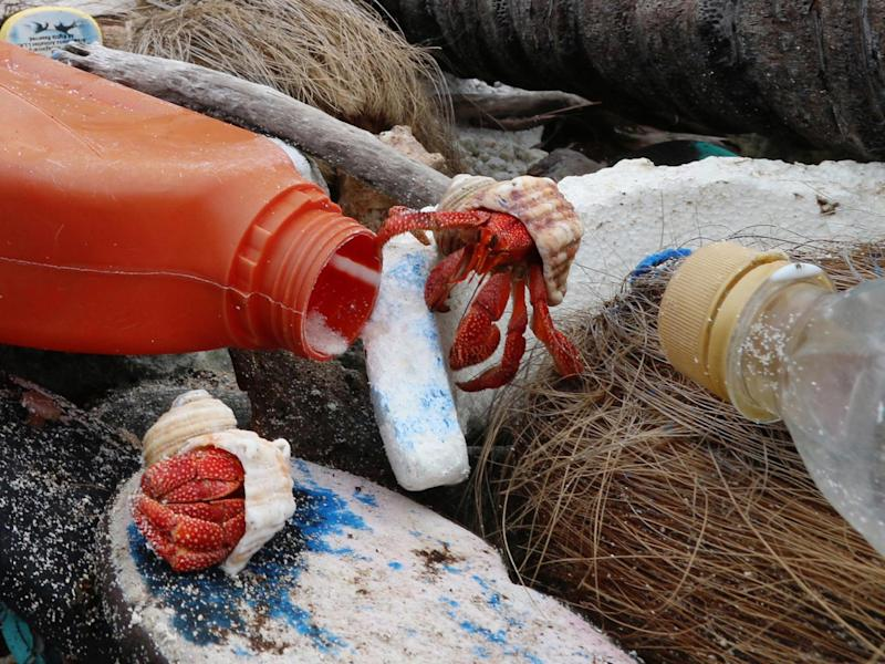 Hermit crabs are at risk of climbing into discarded plastic containers that they cannot get out of and dying inside them: Imas
