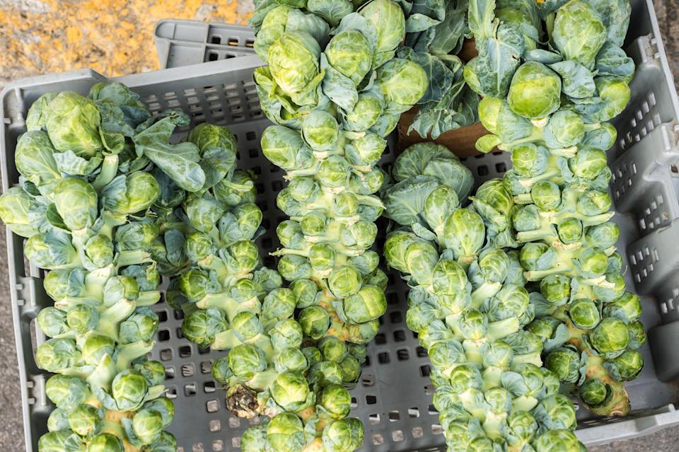 """<p>If you see Brussels sprouts available on the stalk at the farmers market from September through November, snatch them up ASAP as that's when they're most delicious. The classic way to use this cruciferous vegetable is to <a href=""""https://www.thedailymeal.com/best-way-cook-brussels-sprouts?referrer=yahoo&category=beauty_food&include_utm=1&utm_medium=referral&utm_source=yahoo&utm_campaign=feed"""" rel=""""nofollow noopener"""" target=""""_blank"""" data-ylk=""""slk:roast it in the oven"""" class=""""link rapid-noclick-resp"""">roast it in the oven</a>, though <a href=""""https://www.thedailymeal.com/recipes/basic-air-fryer-brussels-sprouts-recipe?referrer=yahoo&category=beauty_food&include_utm=1&utm_medium=referral&utm_source=yahoo&utm_campaign=feed"""" rel=""""nofollow noopener"""" target=""""_blank"""" data-ylk=""""slk:an air fryer also does amazing work"""" class=""""link rapid-noclick-resp"""">an air fryer also does amazing work</a>. For an un-roasted Brussels sprout experience, shave them thin and <a href=""""https://www.thedailymeal.com/recipes/brussels-sprout-salad-pear-and-pomegranate-recipe?referrer=yahoo&category=beauty_food&include_utm=1&utm_medium=referral&utm_source=yahoo&utm_campaign=feed"""" rel=""""nofollow noopener"""" target=""""_blank"""" data-ylk=""""slk:serve them raw in a salad with other fall favorites, pear and pomegranate"""" class=""""link rapid-noclick-resp"""">serve them raw in a salad with other fall favorites, pear and pomegranate</a>.</p>"""