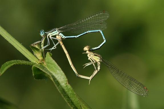 Why Insects Have Gay Sex