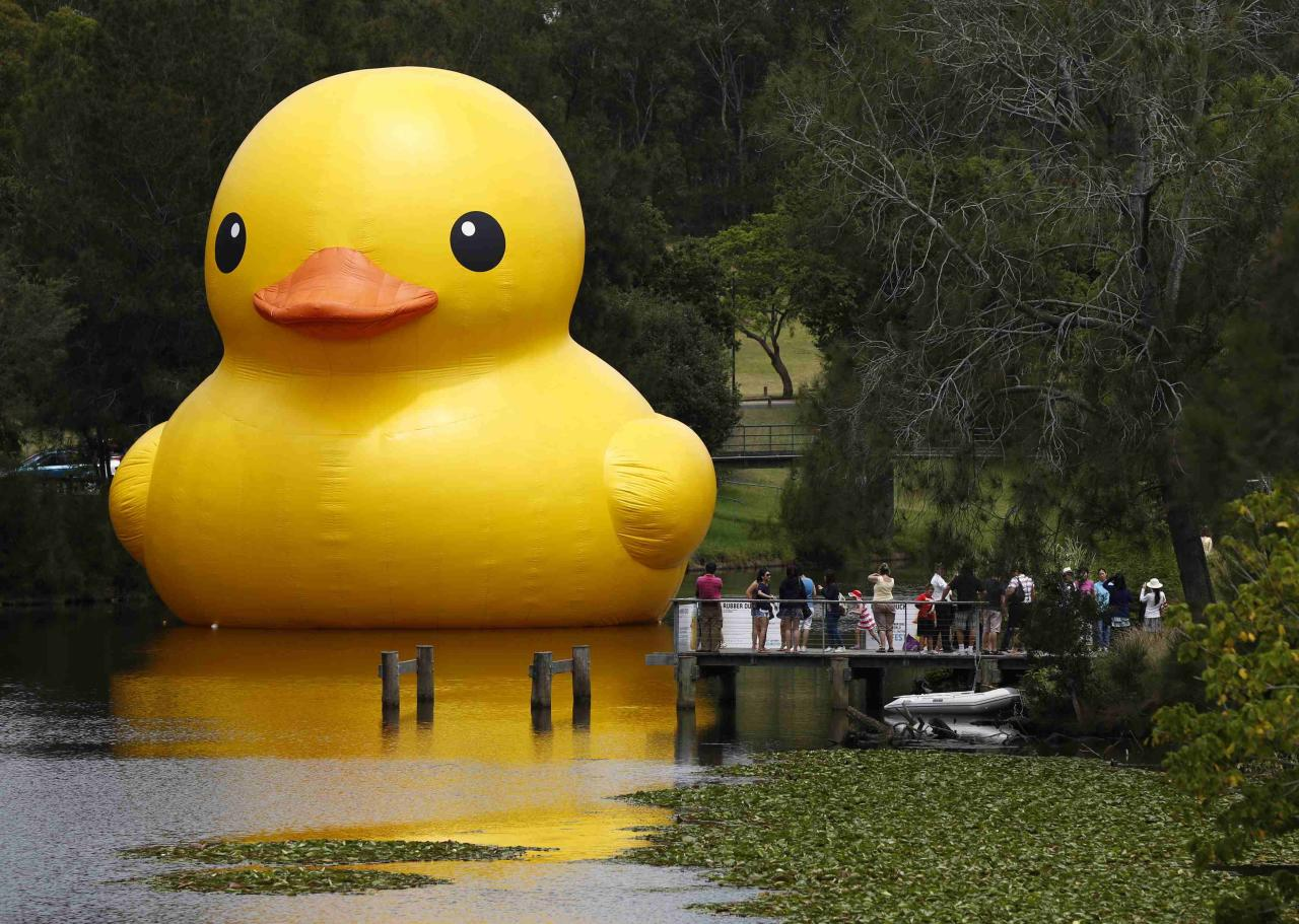 The giant inflatable Rubber Duck installation by Dutch artist Florentijn Hofman floats on the Parramatta River, as part of the 2014 Sydney Festival, in Western Sydney January 10, 2014. The creation is five stories tall and five stories wide and has been seen floating in various cities around the world since 2007. REUTERS/Jason Reed (AUSTRALIA - Tags: SOCIETY)