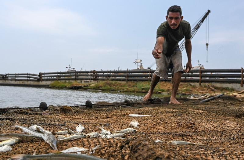 Juan Maurice finds only slim pickings in his fishing net cast in the dirty, oil-slicked waters of Lake Maracaibo (AFP Photo/Juan BARRETO)