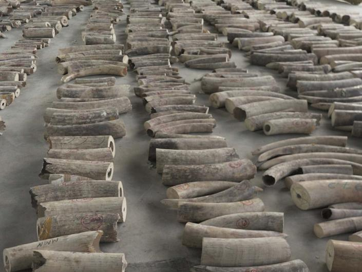 Elephant tusks confiscated in Singapore: EPA