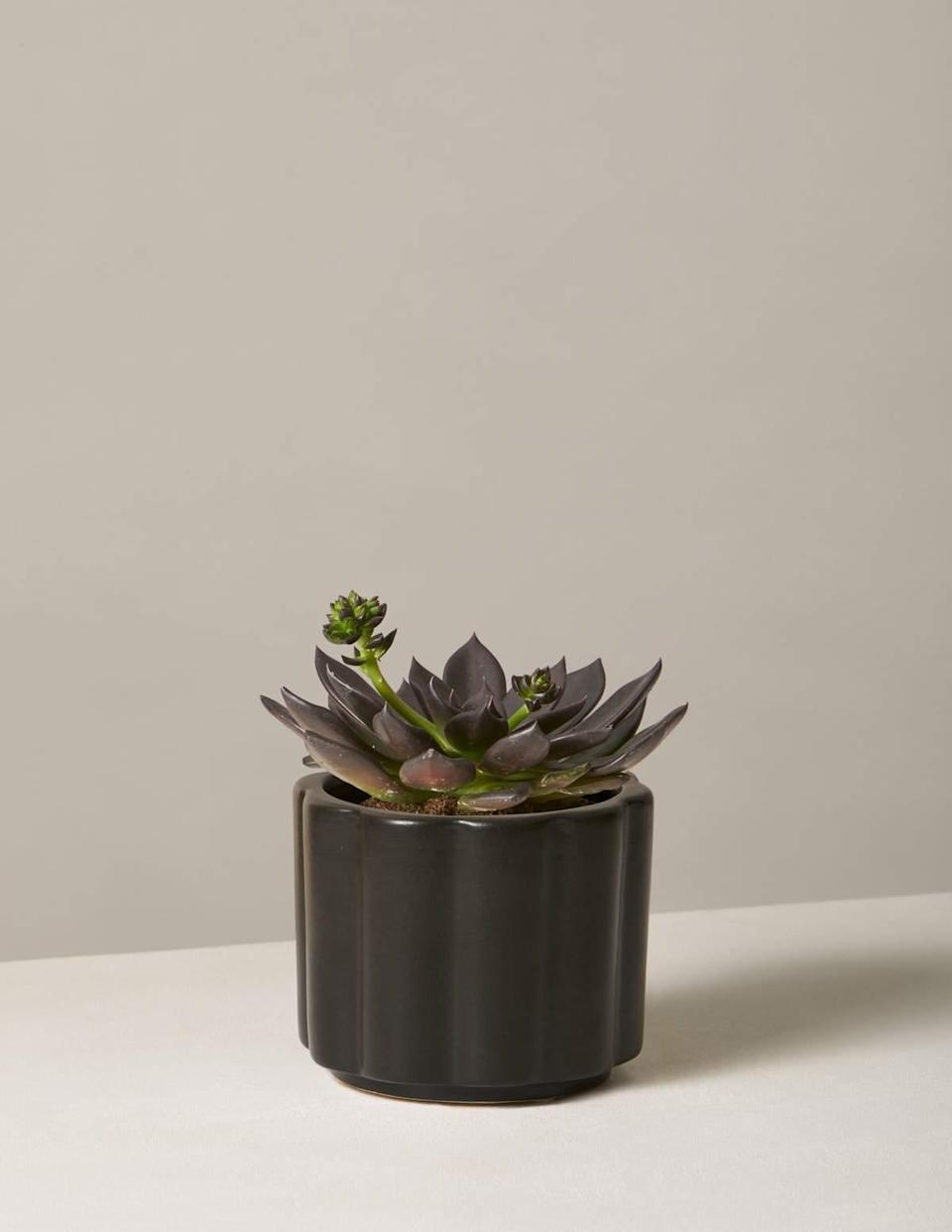 """<br><br><strong>The Sill</strong> Echeveria Preta, $, available at <a href=""""https://go.skimresources.com/?id=30283X879131&url=https%3A%2F%2Fwww.thesill.com%2Fproducts%2Fecheveria-preta"""" rel=""""nofollow noopener"""" target=""""_blank"""" data-ylk=""""slk:The Sill"""" class=""""link rapid-noclick-resp"""">The Sill</a>"""
