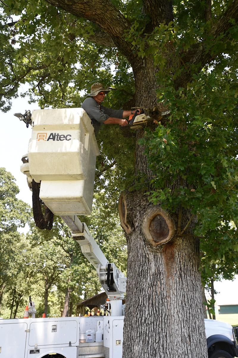 Mountain Home Parks Department employee Darryl Cheek cuts a limb from an oak tree Friday at Cooper Park in Mountain Home, Ark.
