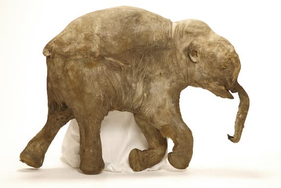 Last Terrifying Moments of Baby Mammoths Revealed