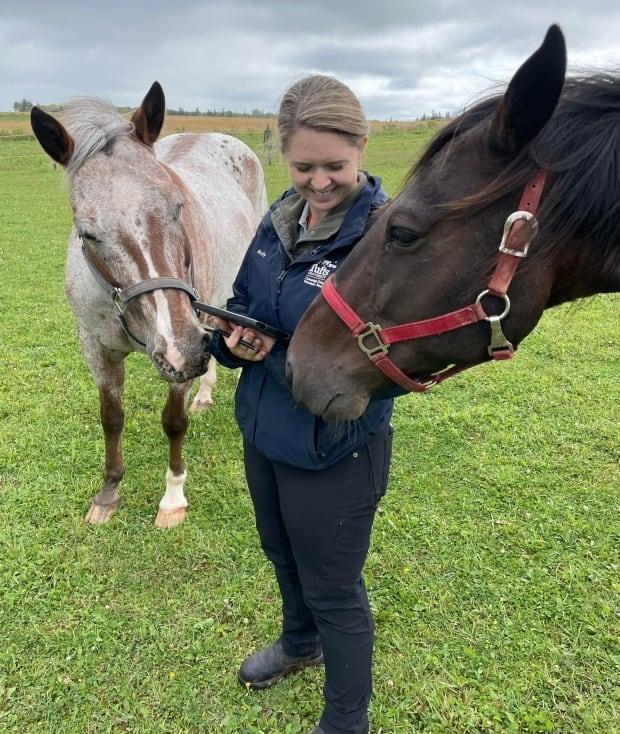 Molly Mills, a veterinarian with the AVC, says the study will include recommendations for horse owners. (Atlantic Veterinary College - image credit)