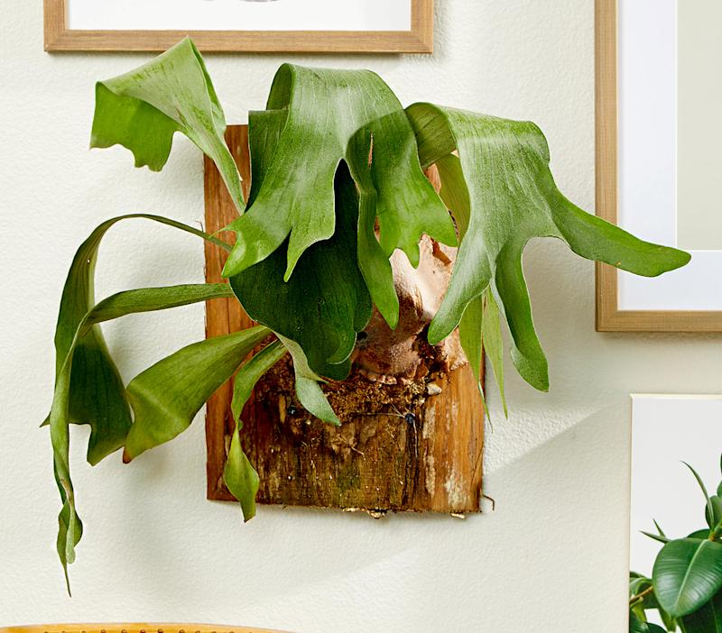 9 Indoor Ferns That Will Turn Your Home into a Tropical Paradise